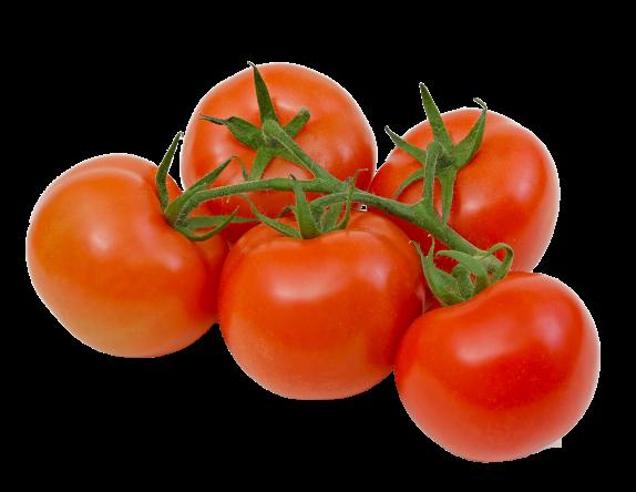 tushda pamidor